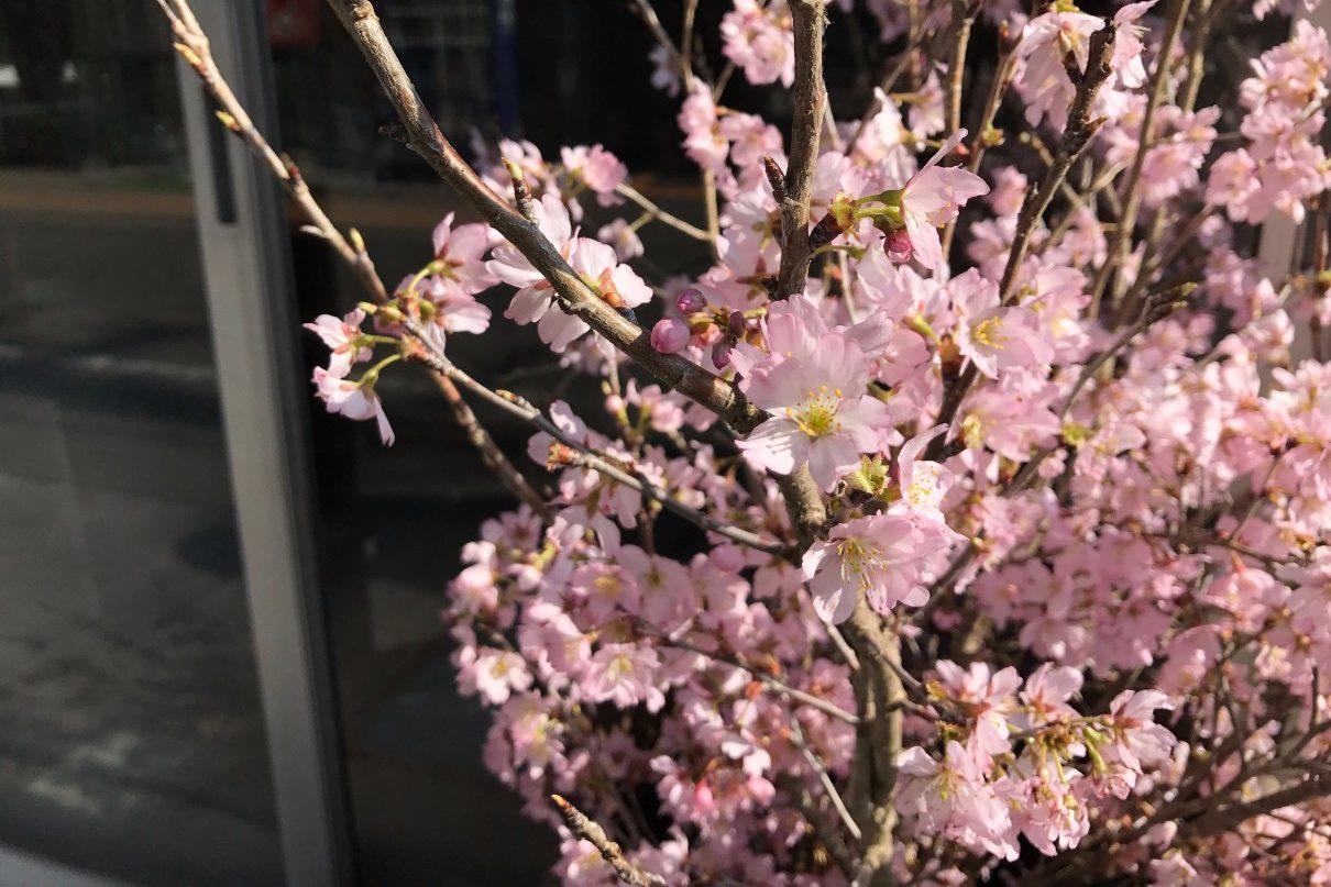 六九通りの花屋 、ことの葉