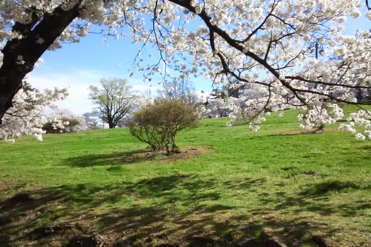松本市城山公園