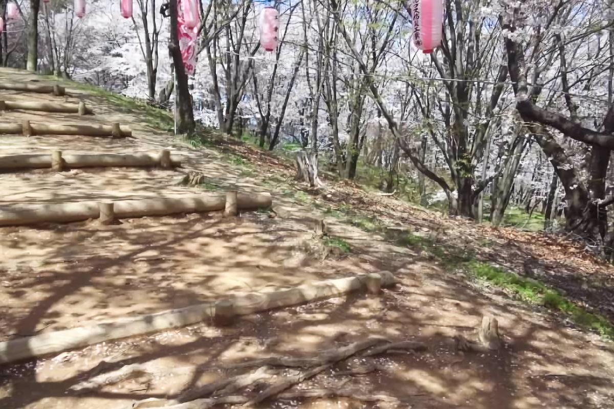 満開の桜の弘法山古墳